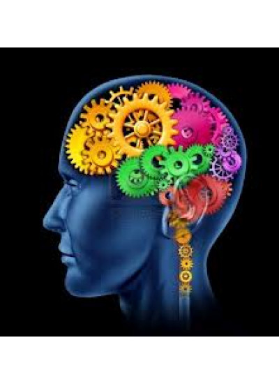 THINKIES: Human Brain
